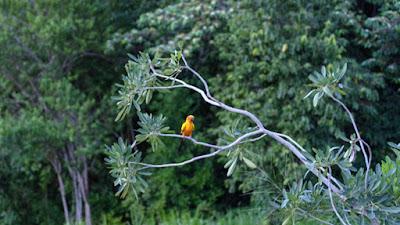 Loreto: Ministerio del Ambiente reconoce nueva Área de Conservación Privada