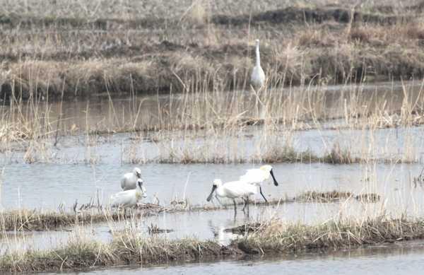 DPRK Waterbirds