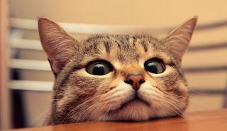 ¿Sabías que...? 25 Datos curiosos sobre gatos