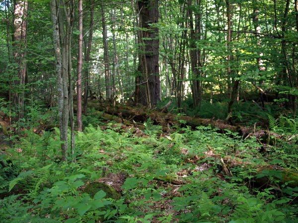 Extreme Adirondacks: Surviving the 1995 Microburst - - The