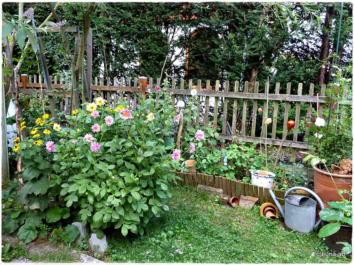 lunas garten rosen vielfalt rund um 39 s langbeet. Black Bedroom Furniture Sets. Home Design Ideas
