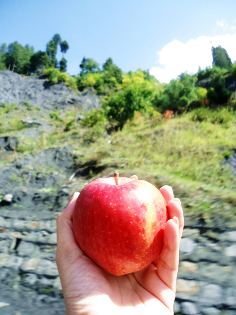 Red Apples of Naran Kaghan Valley