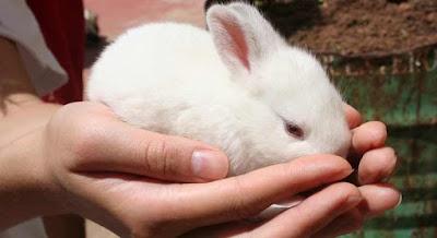 prueba conejo embarazada
