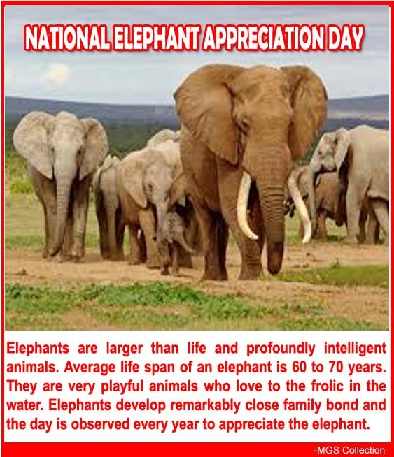 National Elephant Appreciation Day Wishes Awesome Images, Pictures, Photos, Wallpapers