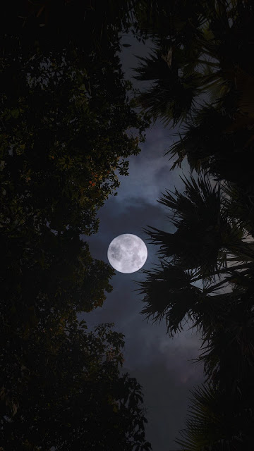 Night, Moon, Trees, Leaves, Branches