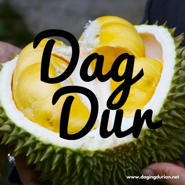 jual-daging-durian-medan-terenak-di-payakumbuh