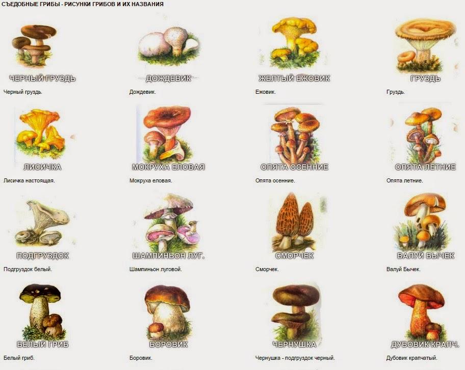 Песня посмотри растут грибочки возле каждого пенечка скачать.