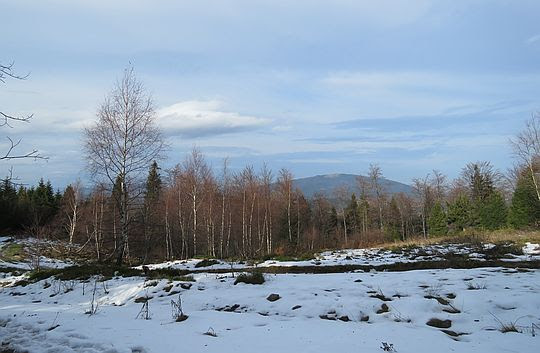 Ponad drzewami widoczny jest Ćwilin.