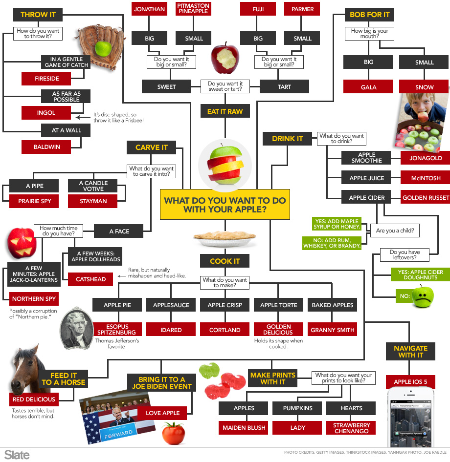hight resolution of slate has created an amazing flow chart for what apple variety to pick based on your chosen apple related activity from bobbing to baking to carving to