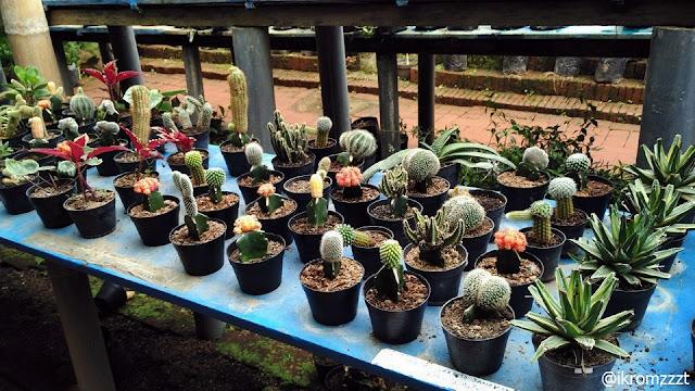 koleksi kaktus eco green park batu