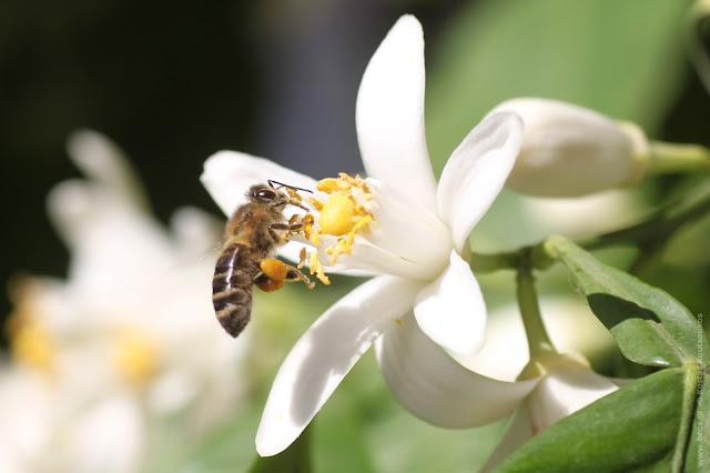"""Στα μέρλιν της Αργολίδας """"ποντάρουν"""" οι μελισσοκόμοι"""