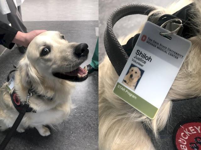 Anjing Ini Diangkat Jadi 'Karyawan' di Rumah Sakit, Kerjaannya Tak Terduga