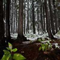 FunEscapeGames-Snow Fores…