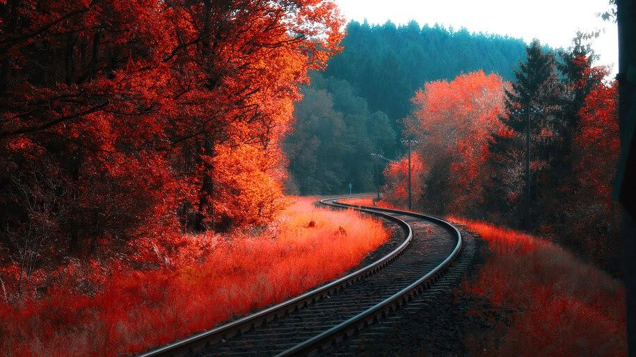 Autumn, Forest, Railroad, Landscape, Scenery, 4K, #6.976