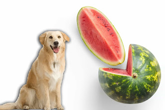 Can dogs eat watermelon, Can dogs have watermelon