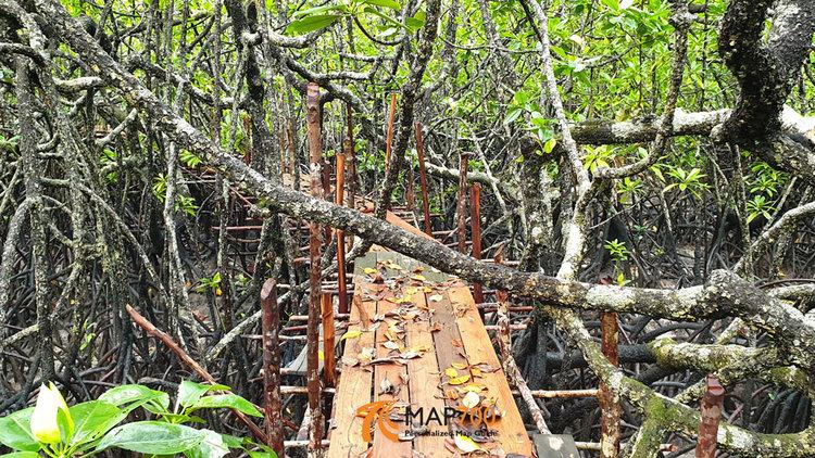 Granit Hutan Mangrove Kuale