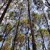 Pinus Pengger Djogja