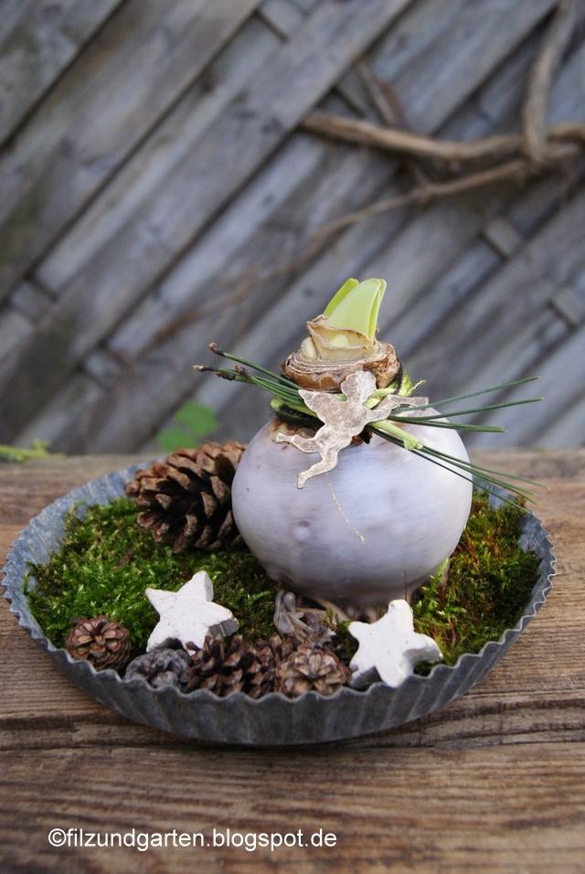 Selbst gewachste Amaryllis mit Kiefernadeln auf Moos dekoriert