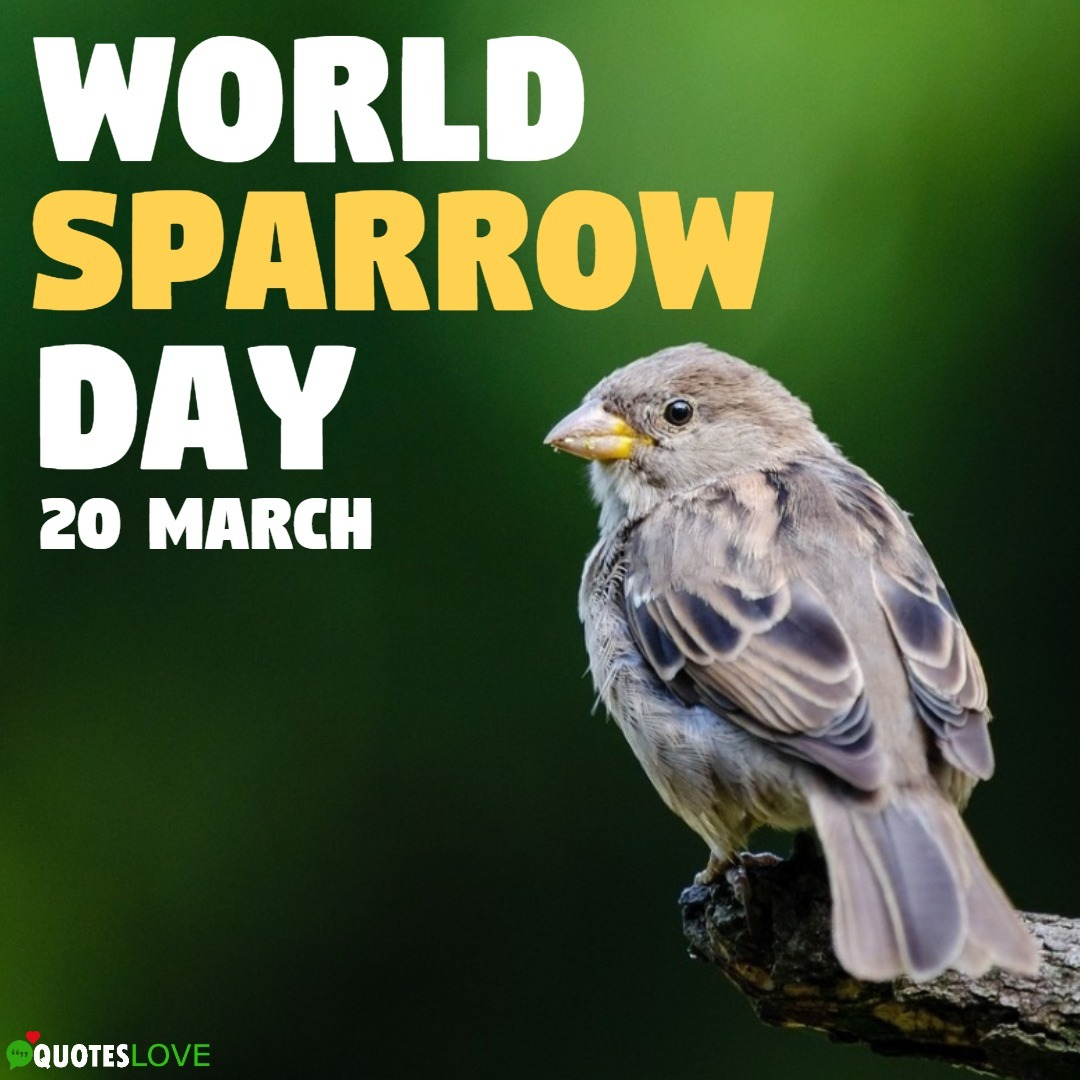 World Sparrow Day Images, Poster, Pictures, Wallpaper