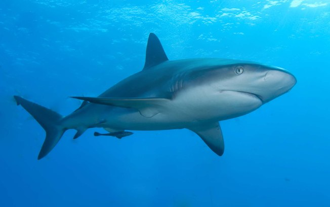 Tubarão de 6 metros aterroriza pescadores na Austrália (VÍDEO)