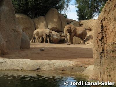 Elefantes en Bioparc Valencia