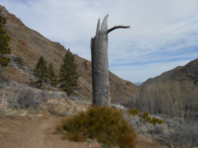 dead tree, winter, desert, sage brush, hiking trail