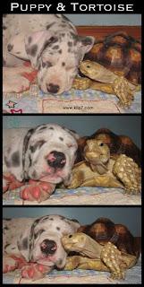 """Foto de coleccion: """"Dos buenos amigos"""""""