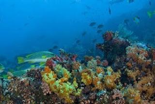 Keindahan Bawah Laut Pulau Flores Indonesia