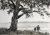 Charcoal drawing of a tree, Demo work created during an ART WORKSHOP