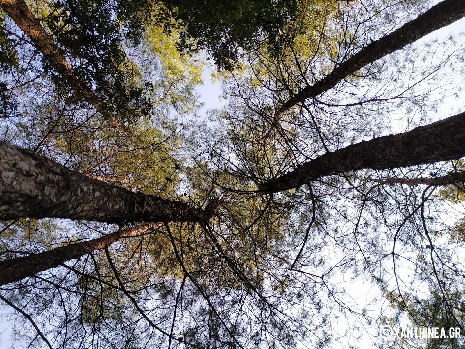 Το μονοπάτι της ζωής: Μια ανάσα πρασίνου στην Ξάνθη - ΦΩΤΟ