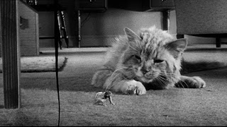 El increíble hombre menguante (1957) The Incredible Shrinking Man