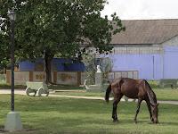 Kuba, Matanzas, Versalles, blaues Gebäude des Hersheybahnhofs, davor weidet ein knochiges Pferd auf dem Rasen