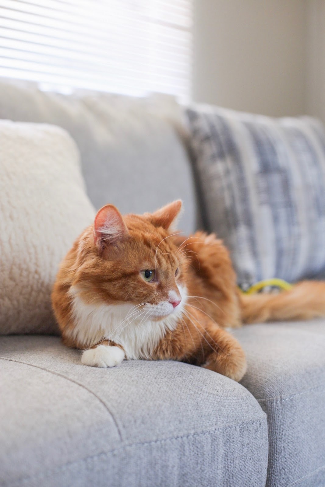 Life Update and What I'm Currently Loving This Fall - Meet Simba The Cat - Affordable by Amanda Blog