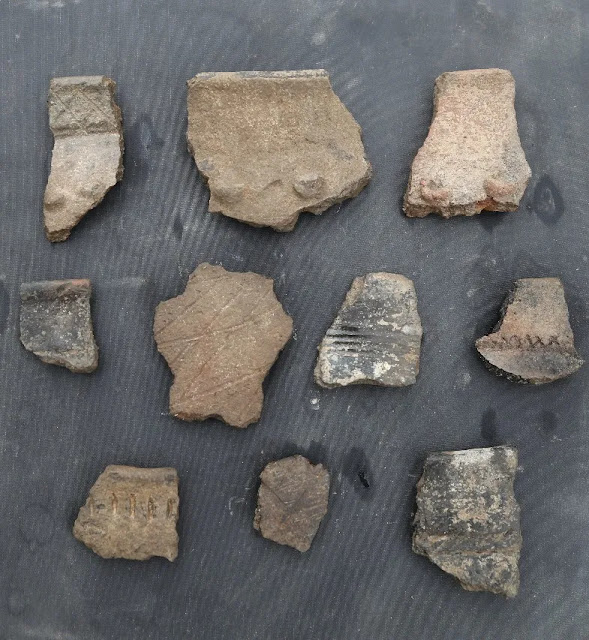 3,500-year-old settlement site discovered in Xinjiang