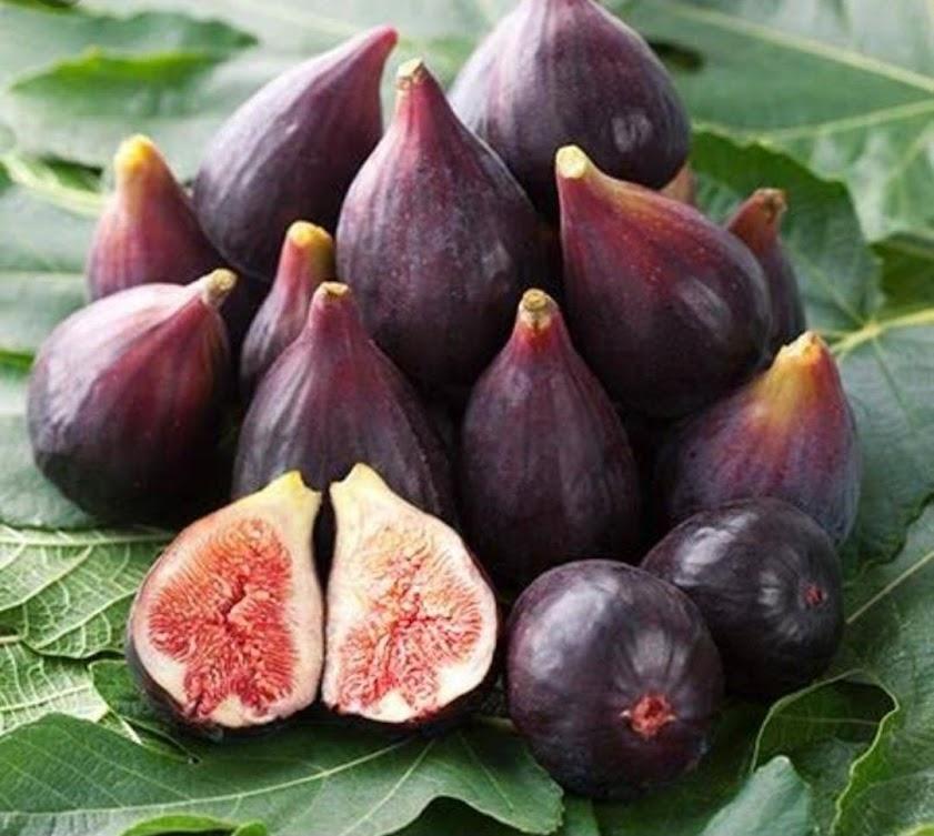 termurah terlaris bibit pohon tin ara tsu purple super Kupang