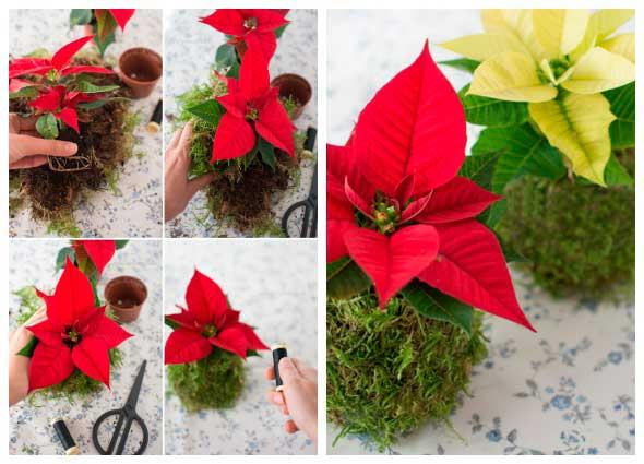 kokedamas, bola de musgo, plantas, decoración, tutoriales, kokedama, japones