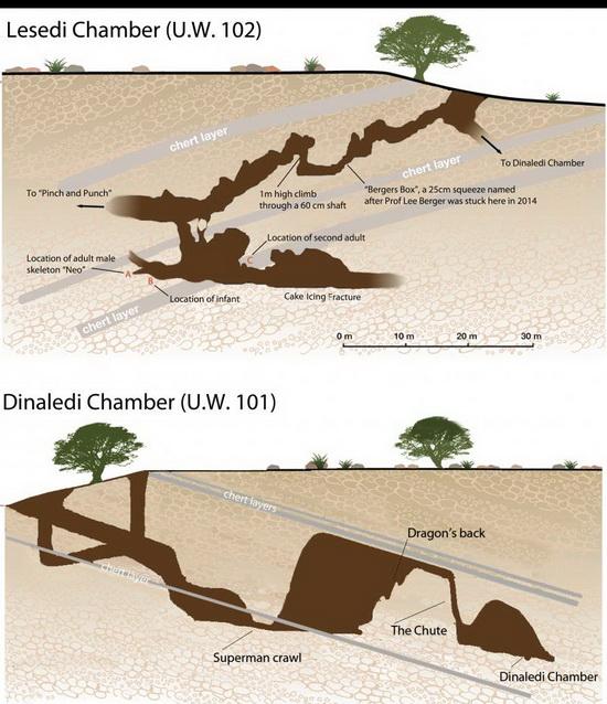 LaporanPenelitian.com Homo naledi Hidup dengan Homo sapiens Sampai Pleistosen Tengah