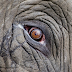 Is Your Invasive Curiosity The Elephant In The Room?