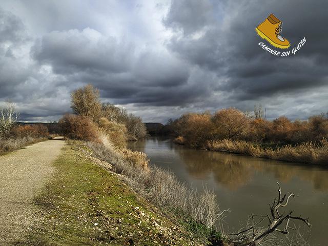 Orillas del río Jarama en el Soto de las Juntas