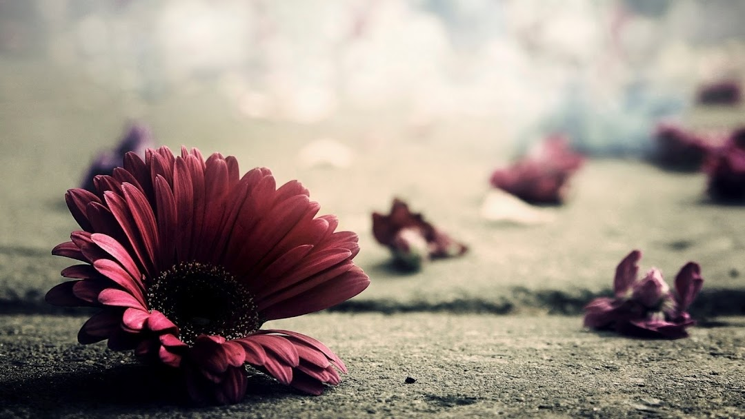 Flowers Macro HD Wallpaper 3