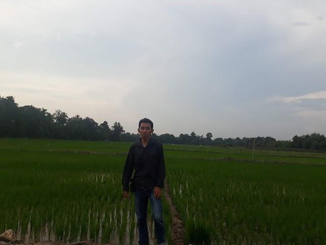 Dari sini asalnya beras, dari Padi yang ditanam Petani