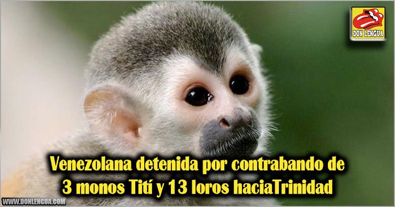 Venezolana detenida por contrabando de 3 monos Tití y 13 loros haciaTrinidad