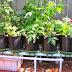 Tips Cara Membangun Usaha Agribisnis dengan Lahan Sempit
