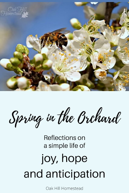 Live a simple, joyful life! A reflection on finding joy and hope in an orchard in spring.