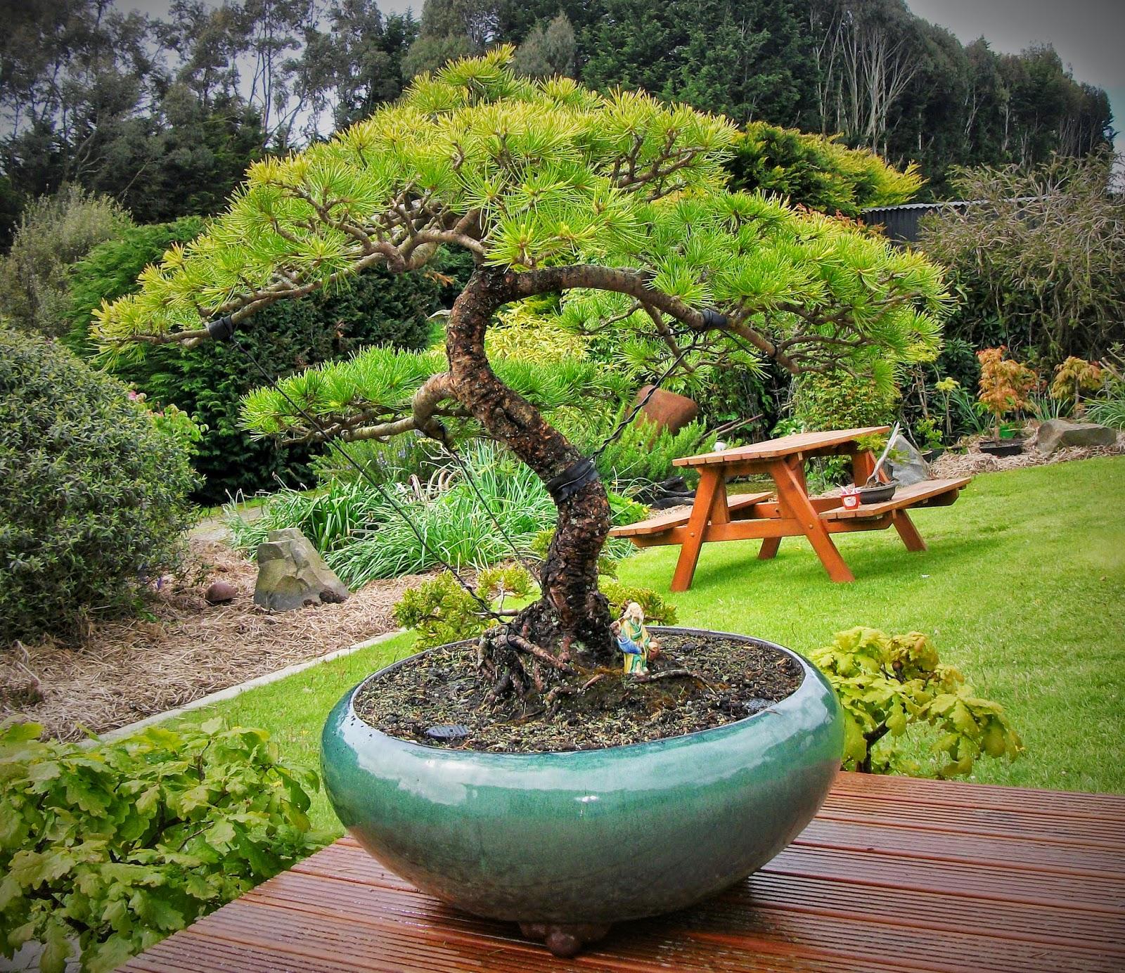 fionnas bonsai pots kiwi made in new zealand my golden