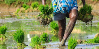 agriculture-will-help-economy-to-overcome-covid