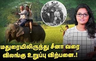 Wild Animal Hunt | சிலை செய்ய யானை தந்தம்தான் வேண்டுமா?