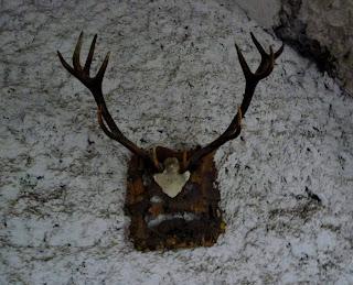 Замок Сент-Миклош. Охотничьи трофеи
