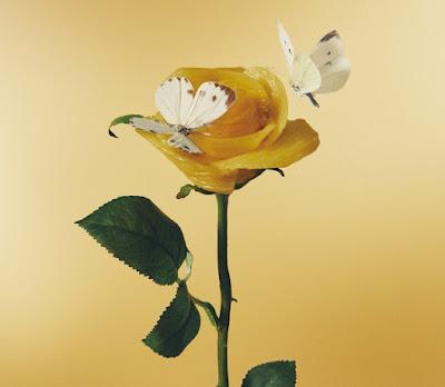 Aimyon あいみょん - Asahi (朝陽) lyrics lirik 歌詞 arti terjemahan kanji romaji indonesia translations download streaming 3rd album Oishii Pasta ga Aru to Kiite