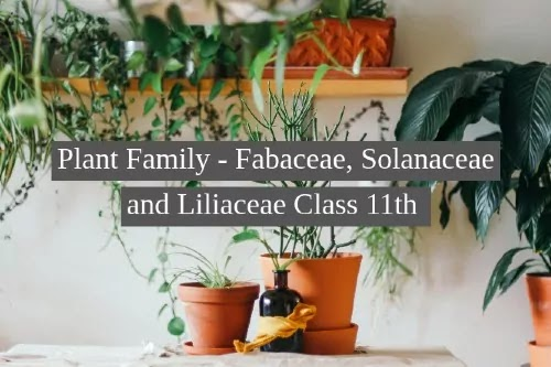 Plant Family - Fabaceae, Solanaceae and Liliaceae Class 11th